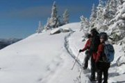 Snowshoeing Tannourine cedar reserve with the Wolves Clan
