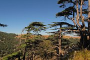 The Cedars of Tannourine - Hike with Lunch