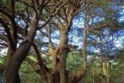Hiking Arz Hadath El Jebbeh with Wild Adventures