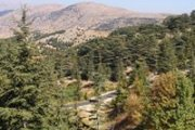 Hiking and Yoga Day at Al Shouf Cedar's Reserve
