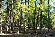 WALKLEB Hiking Al Qammoua to Al Ezer forest