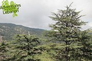 Al Shouf Cedar Reserve Hike with Adventures in Lebanon