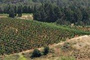 Trip to Bekaa Valley