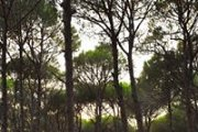 Free yoga with Ziad under Brumana's pine trees ❤️