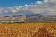 Route des Vins de la Bekaa / Bekaa Wineries