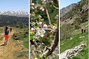The Cedars of Hadeth el Jebbeh & Tannourine – Guided Hike with Lunch
