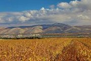 Route des Vins de la Bekaa / Bekaa Wineries with Tourleb