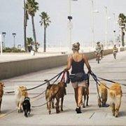 Beirut Dog Walk Event September 2016