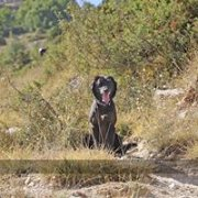 Walk with your dog day 1 / Marche avec ton chien jour 1