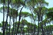 Hiking Roum-Jezzine with ProMax