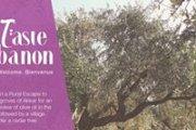 Zejd Olive Picking & Tasting
