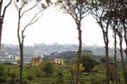 Rush of pine scent.- Hike Btebyat