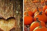 Fall Coloring Night
