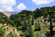 Hiking & Touring the Shouf Biosphere Reserve