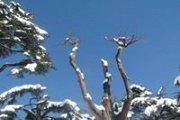 Al ARZ Snowshoeing with Vamos Todos