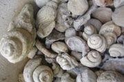 Ramassage de fossiles en montagne avec Neos Kids