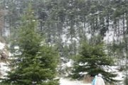 Snowshoeing in Shouf Reserve - Ain Zhalta with Footprints Nature Club