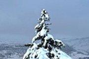 Qoubbaiyat Forest Snowshoeing with Wild Adventures