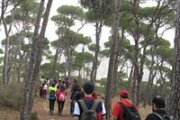 Bkassine Pine Forest Hike with Adventures in Lebanon