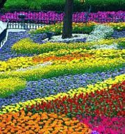 The Garden Show & Spring Festival 2012