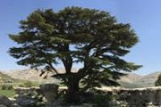 Spring Hike at Tannourine Cedars Reserve with GREEN STEPS
