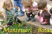 Atelier Montessori - Botanique