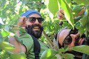 Cherry Picking! by Vamos Todos
