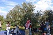 Sortie familiale: Journée dans les champs et cueillette d'olives avec Decouvre LB