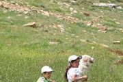 Walk With Your Dog(s): Douma - Balaa