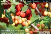 Aakoura Cherries And More