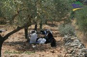 Olive Tour with Lebanese Adventure