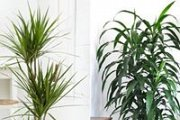 Taking Care of Indoor Plants with Marc Beyrouthy