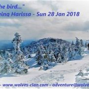 Call of the Bird -Snowshoeing Harissa with Wolves Clan