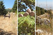 Shouf Biosphere - Guided Hike with Living Lebanon
