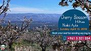 Cherry Blossom at Nabi Ayla with Lebanon Stories