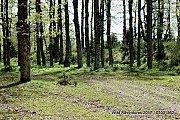 Qammouaa Forest-Tachaa Hike with Wild Adventures