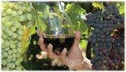 Wine Tour in Batroun with CMA Croisières & Voyages