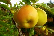 Apple Day Hike with Wild Adventures