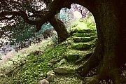 Roman Oaks Hike with Wild Adventures
