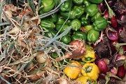 Badaro Farmers Market - Tarneeb Tournament