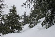 Snowshoeing in Barouk Reserve with Born2Hike