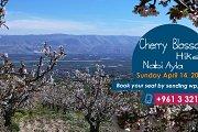 Cherry Blossom Hike - Nabi Ayla