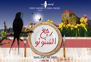 Swallows Are Back - رجع السنونو Rural Lunches