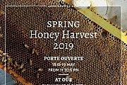 Spring Honey Harvest 2019