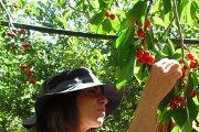 Hiking and Cherry Picking