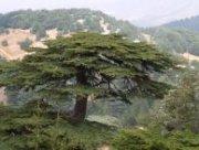 Alternative GROUP TRIP in LEBANON
