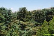 Tannourine Cedar Reserve Hike