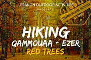 *HIKING IN QAMMOUAA (EZER FOREST) WITH LEBANON OUTDOOR ACTIVITIES*⛰️
