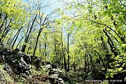 Ozur Forest-Ashtar Hike with Wild Adventures