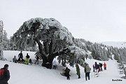 B2h Snowshoeing barouk Reserve